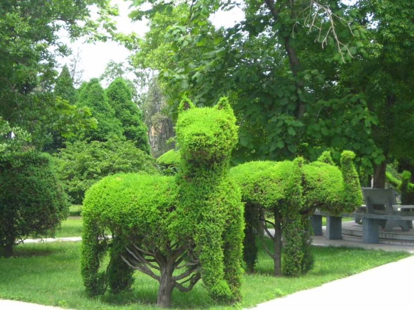 interesting-ideas-for-garden-2